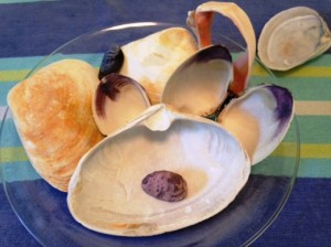 clam arrangement